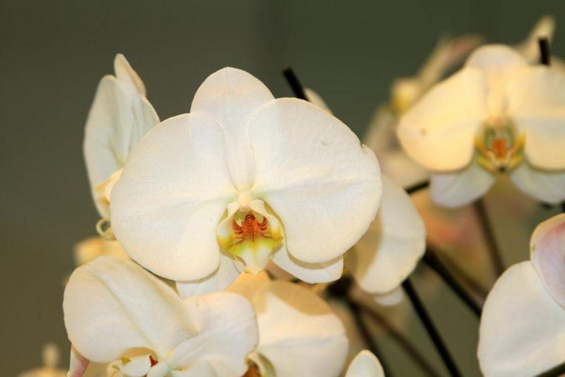 Foto 4 von Der Herzliche Blumenladen in Stuttgart