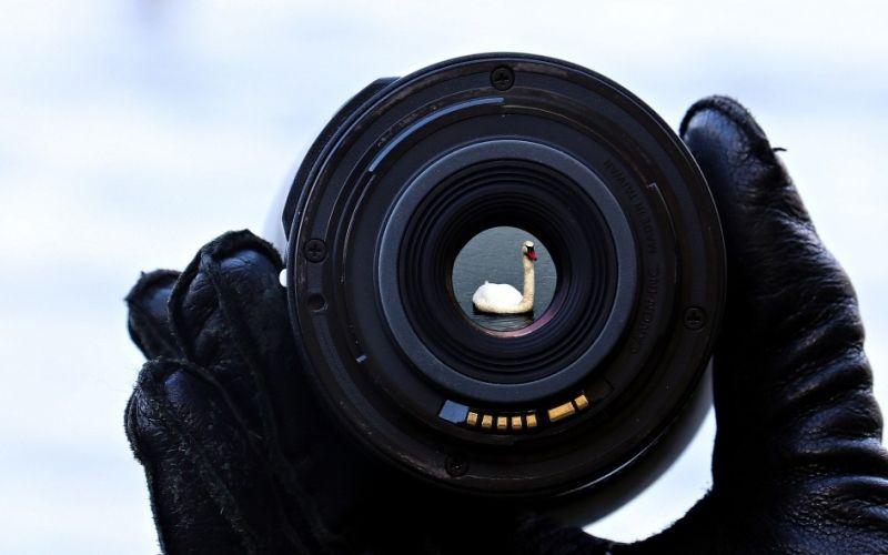 - (c) https://pixabay.com/en/lake-water-focus-lens-swan-nature-1781692