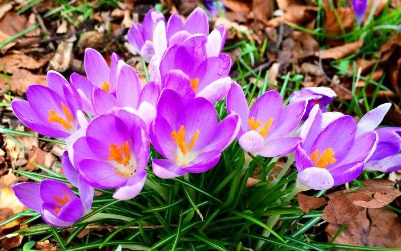 Immer nur Blumen zum Muttertag? - (c) stadtmagazin.com