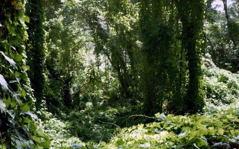 Dschungel - (c) Sandra  / pixelio.de // http://www.pixelio.de/media/150021