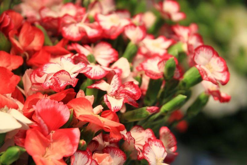Foto 10 von Der Herzliche Blumenladen in Stuttgart
