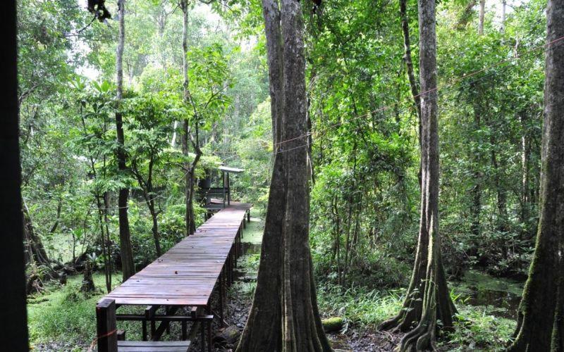 Dschungel  - (c) Flickr / shankar.s / Wald / https://www.flickr.com/photos/shankaronline/11463941183/in/photolist-it85P3-it83Pb-it7ErU-it2Gjk-dyu3hb-dwHyaL-it2HvD-it36jt-it8gdM-it2jLc-it2Ac1-it8eTf-it2ZAC-it38Tr