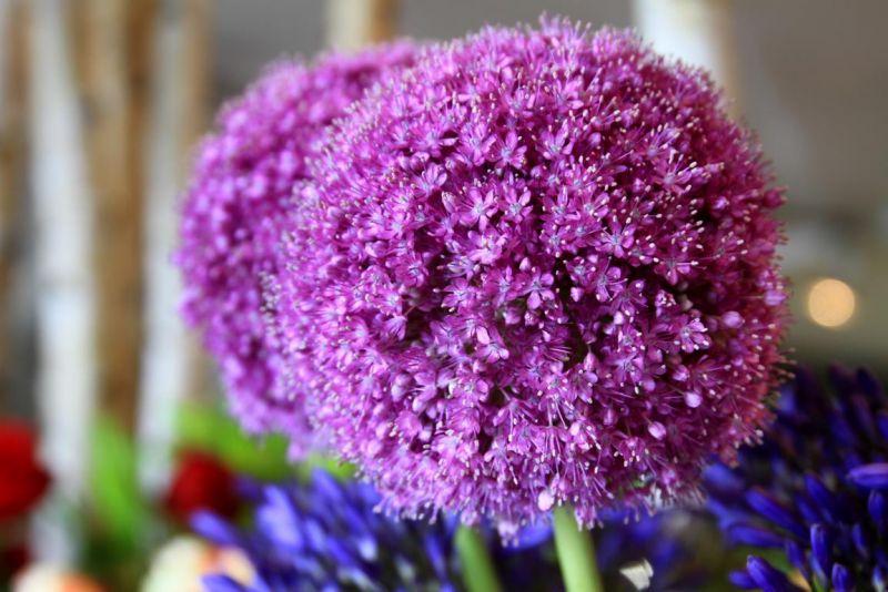 Foto 19 von Der Herzliche Blumenladen in Stuttgart
