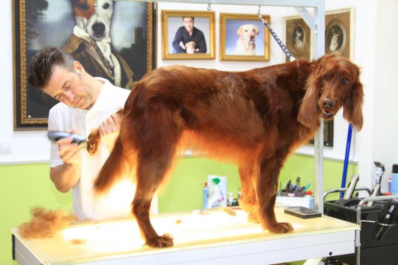 Foto 5 von DOG beauty-lounge in Stuttgart