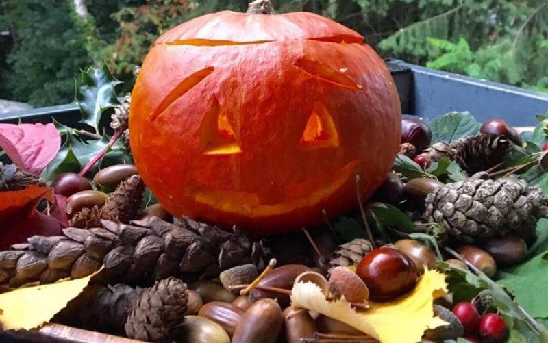 Darauf können wir uns im Herbst freuen! - (c) AAKayvani/stadtmagazin.com