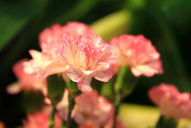 Foto 12 von Der Herzliche Blumenladen in Stuttgart