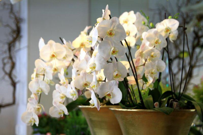 Foto 5 von Der Herzliche Blumenladen in Stuttgart