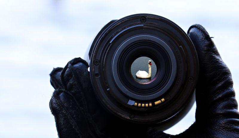 © https://pixabay.com/en/lake-water-focus-lens-swan-nature-1781692