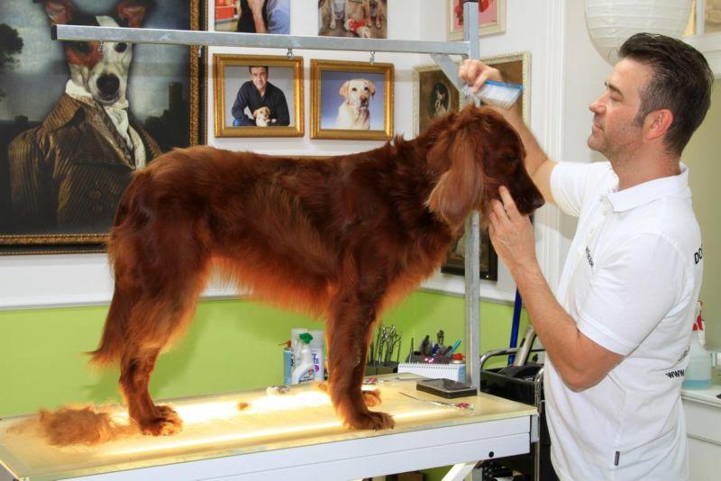 Foto 6 von DOG beauty-lounge in Stuttgart