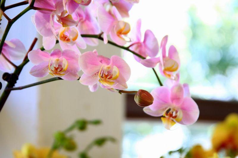 Foto 14 von Der Herzliche Blumenladen in Stuttgart