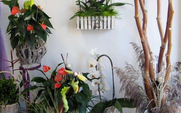 Foto 6 von Blumen Paradies in Sindelfingen