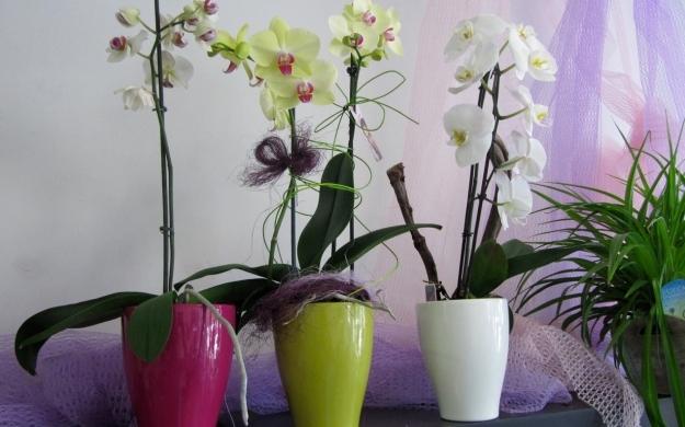 Foto 5 von Blumen Paradies in Sindelfingen