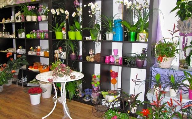 Foto 3 von Blumen Paradies in Sindelfingen