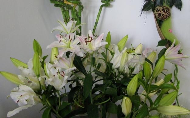 Foto 2 von Blumen Paradies in Sindelfingen